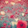 Feel Good Friday: And They Call it Poppy Love