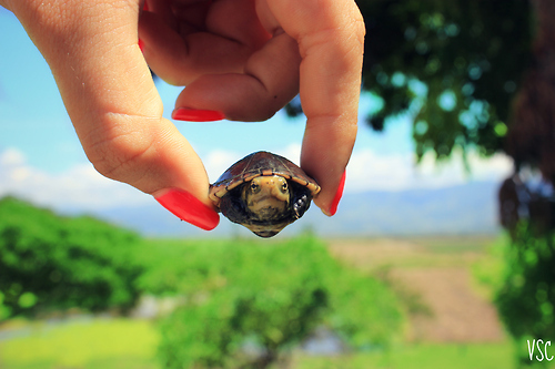 turtle on a mission